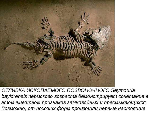ОТЛИВКА ИСКОПАЕМОГО ПОЗВОНОЧНОГО Seymouria baylorensis пермского возраста дем...