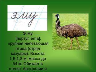 Э́му [португ. éma]. крупная нелетающая птица (отряд казуары). Высота 1,5-1,8