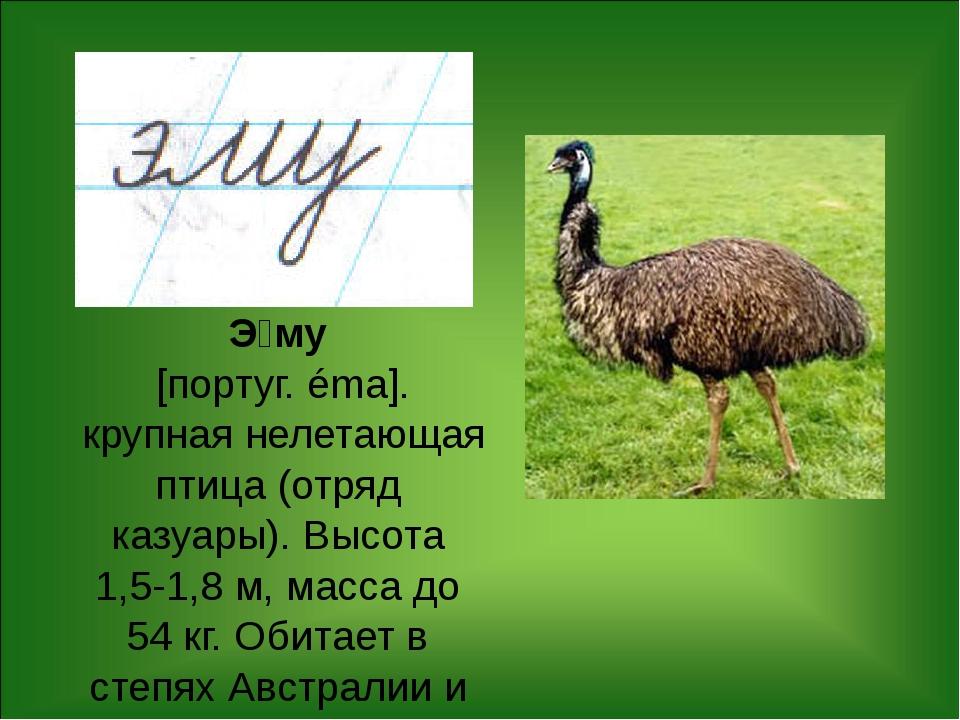 Э́му [португ. éma]. крупная нелетающая птица (отряд казуары). Высота 1,5-1,8...