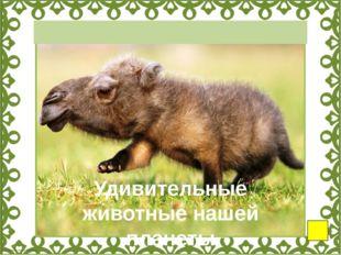 Снежная коза Рыба-мышь Акула-гоблин Муравей-панда Полосатый щетинистый ёж Го