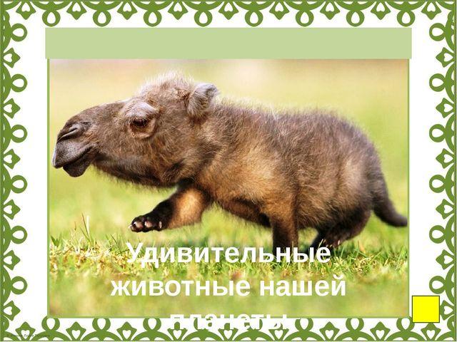Снежная коза Рыба-мышь Акула-гоблин Муравей-панда Полосатый щетинистый ёж Го...