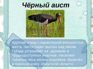 Чёрный аист Крупная птица с характерной внешностью аиста. Часто парит высоко