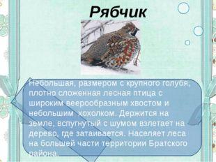 Рябчик Небольшая, размером с крупного голубя, плотно сложенная лесная птица