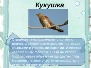 Кукушка Стройная птица размером с голубя с длинным ступенчатым хвостом, остр