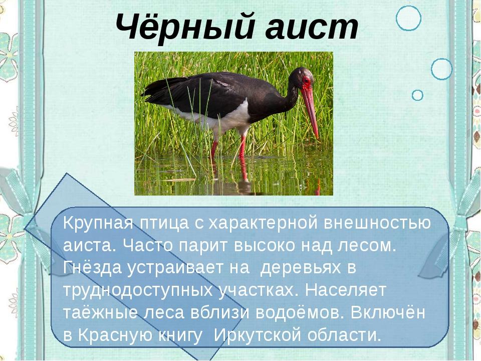 Чёрный аист Крупная птица с характерной внешностью аиста. Часто парит высоко...