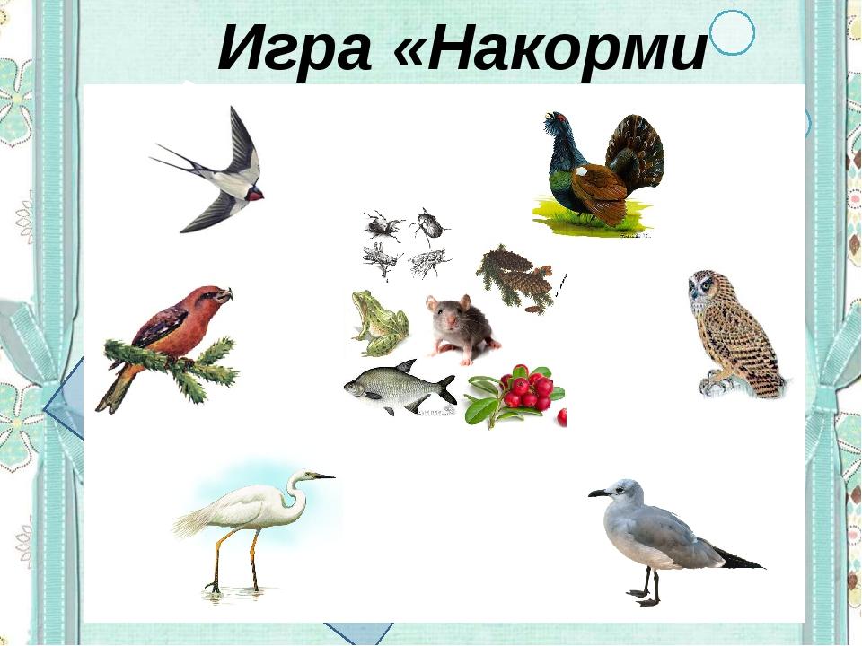 Игра «Накорми птиц»
