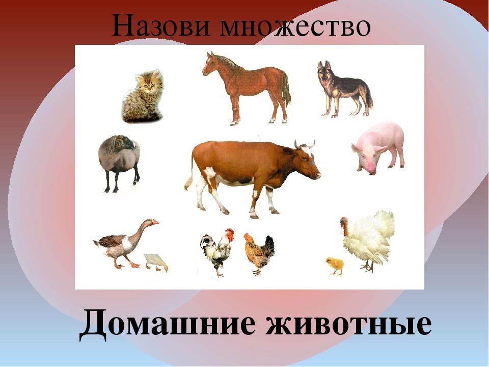 Назови множество Домашние животные
