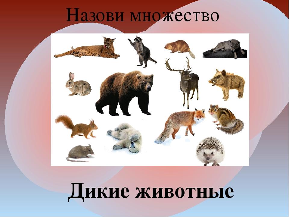 Назови множество Дикие животные