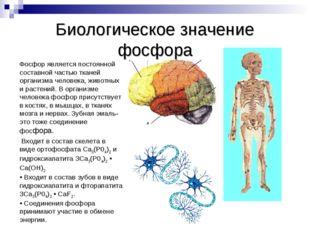 Биологическое значение фосфора Фосфор является постоянной составной частью тк