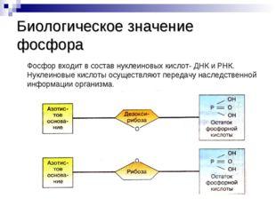Биологическое значение фосфора Фосфор входит в состав нуклеиновых кислот- ДНК