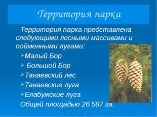 Большой Бор «Большой Бор» - это название большего лесного массива, расположен
