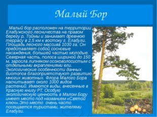 Танаевский лес Танаевский лес располагается на материковом берегу р. Камы и з