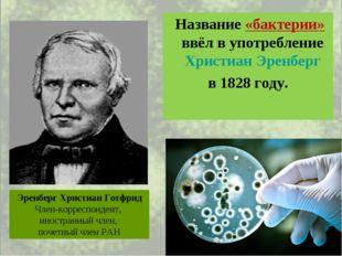 Название «бактерии» ввёл в употребление Христиан Эренберг в 1828 году. Эренб