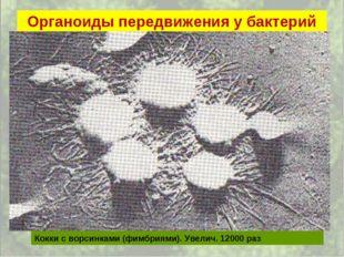 Органоиды передвижения у бактерий Кокки с ворсинками (фимбриями). Увелич. 120