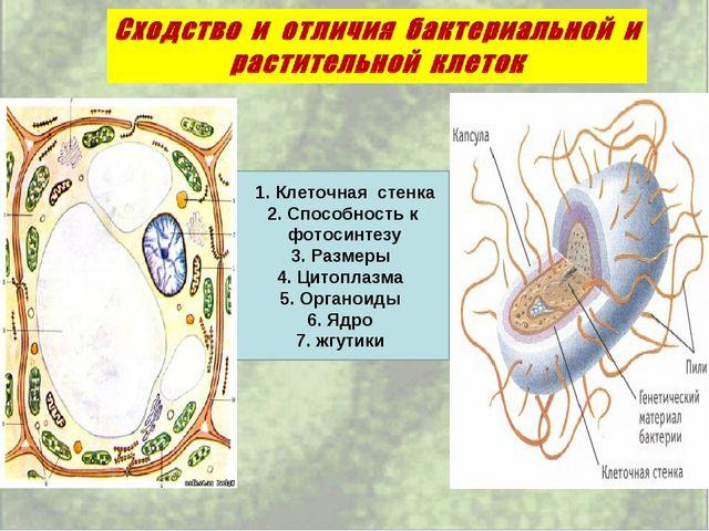 1. Клеточная стенка 2. Способность к фотосинтезу 3. Размеры 4. Цитоплазма 5....