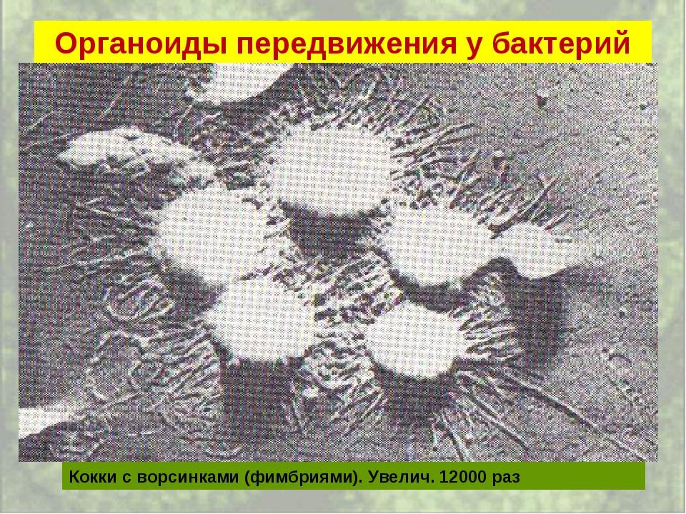 Органоиды передвижения у бактерий Кокки с ворсинками (фимбриями). Увелич. 120...