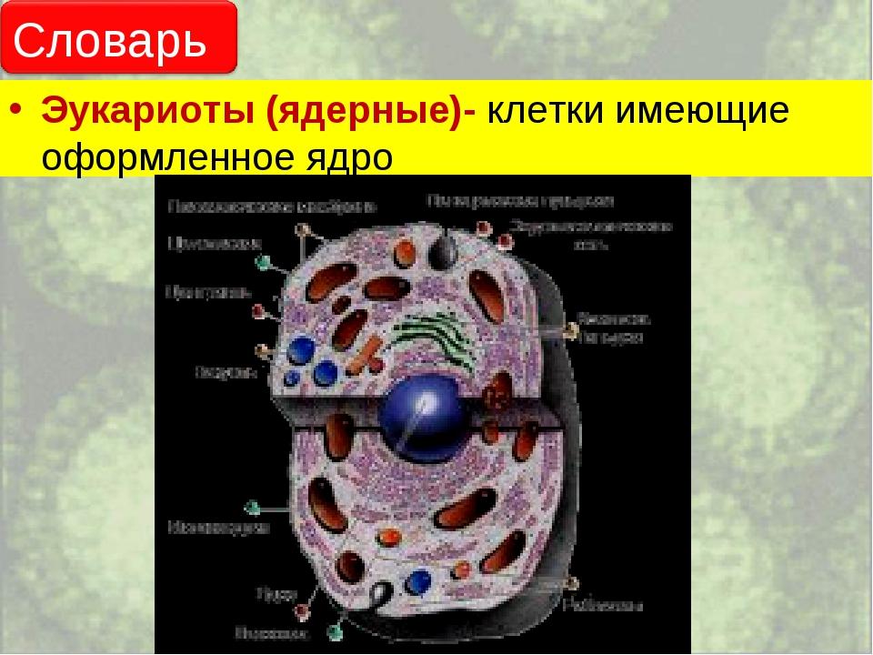 Эукариоты (ядерные)- клетки имеющие оформленное ядро