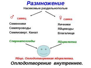 ♂ самец Семенники Семяпроводы Семяизверг. Канал Сперматозоиды ♀самка Яичники