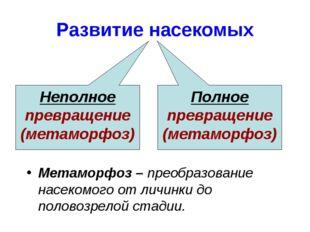 Развитие насекомых Неполное превращение (метаморфоз) Полное превращение (мета
