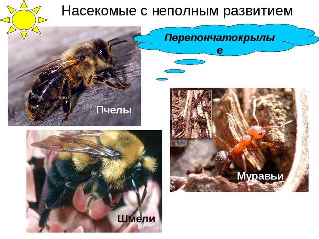Пчелы Муравьи Шмели Перепончатокрылые Насекомые с неполным развитием