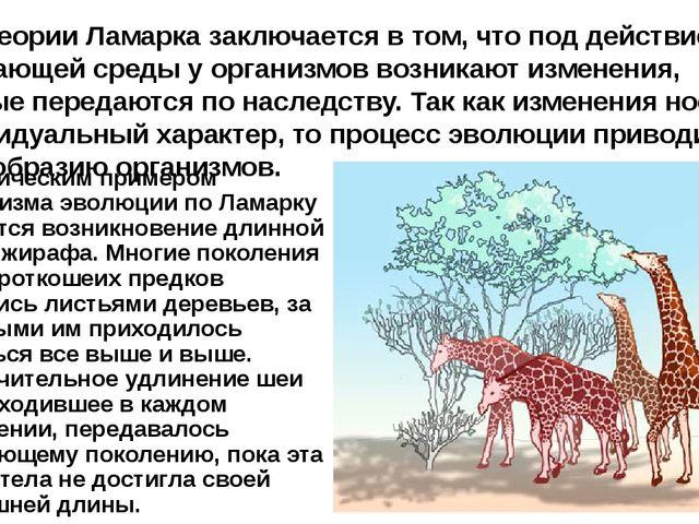 Классическим примером механизма эволюции по Ламарку является возникновение дл...