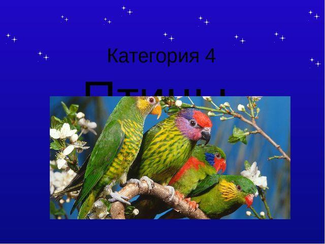 Категория 4 Птицы Тема