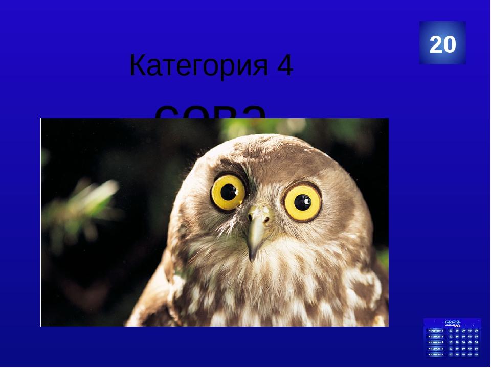 Категория 5 компьютер 40 Категория Ваш ответ