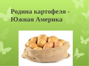 Родина картофеля - Южная Америка