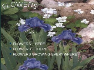 FLOWERS – HERE FLOWERS – THERE FLOWERS GROWING EVERYWHERE
