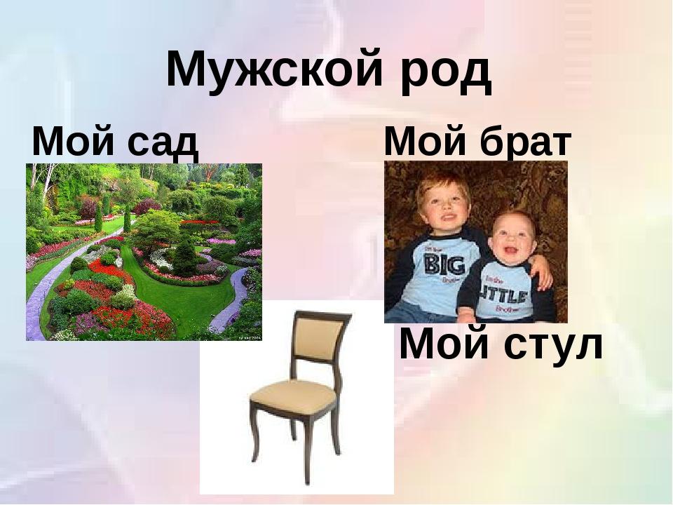 Мой стул Мужской род Мой сад Мой брат