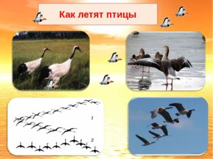 Как летят птицы