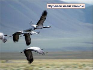 Журавли летят клином