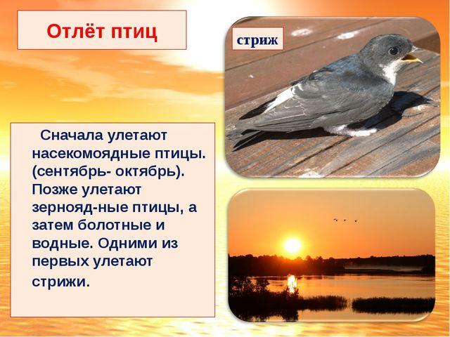 Отлёт птиц Сначала улетают насекомоядные птицы.(сентябрь- октябрь). Позже уле...