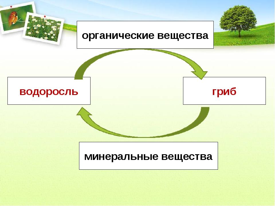 водоросль гриб органические вещества минеральные вещества