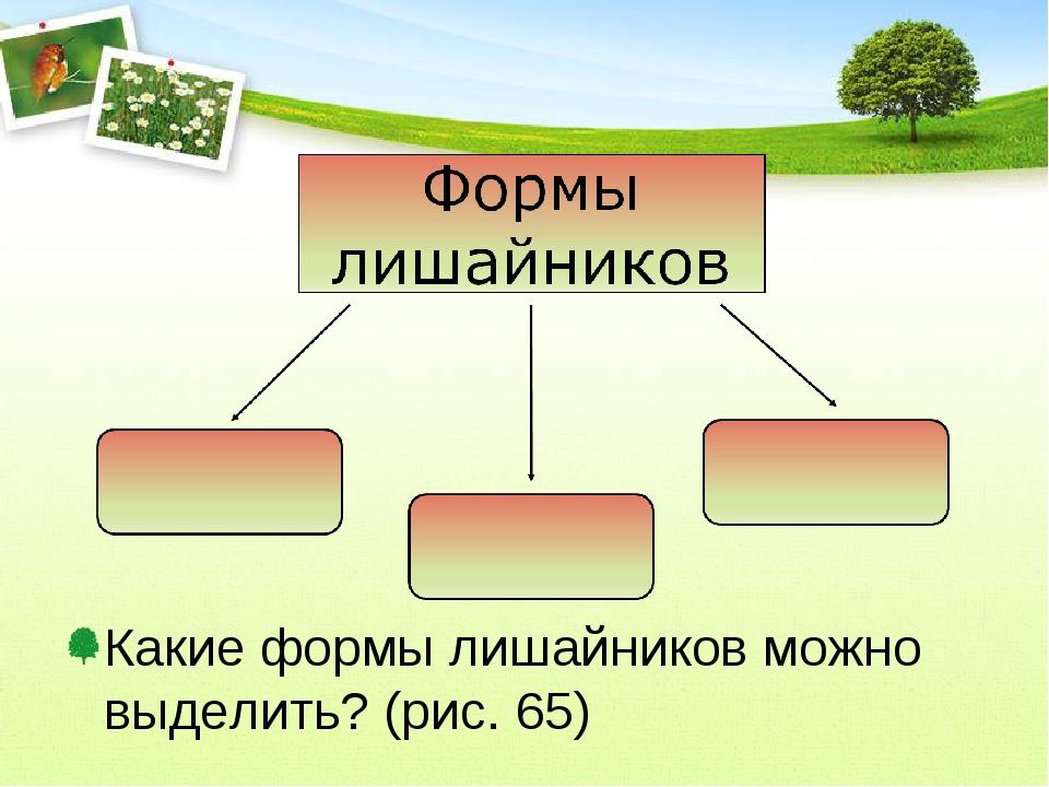 Какие формы лишайников можно выделить? (рис. 65)