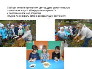 Собирая семена однолетних цветов, дети самостоятельно ответили на вопрос «Отк
