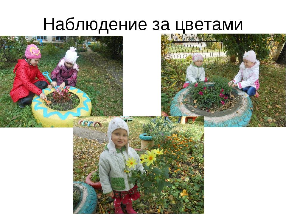 Наблюдение за цветами