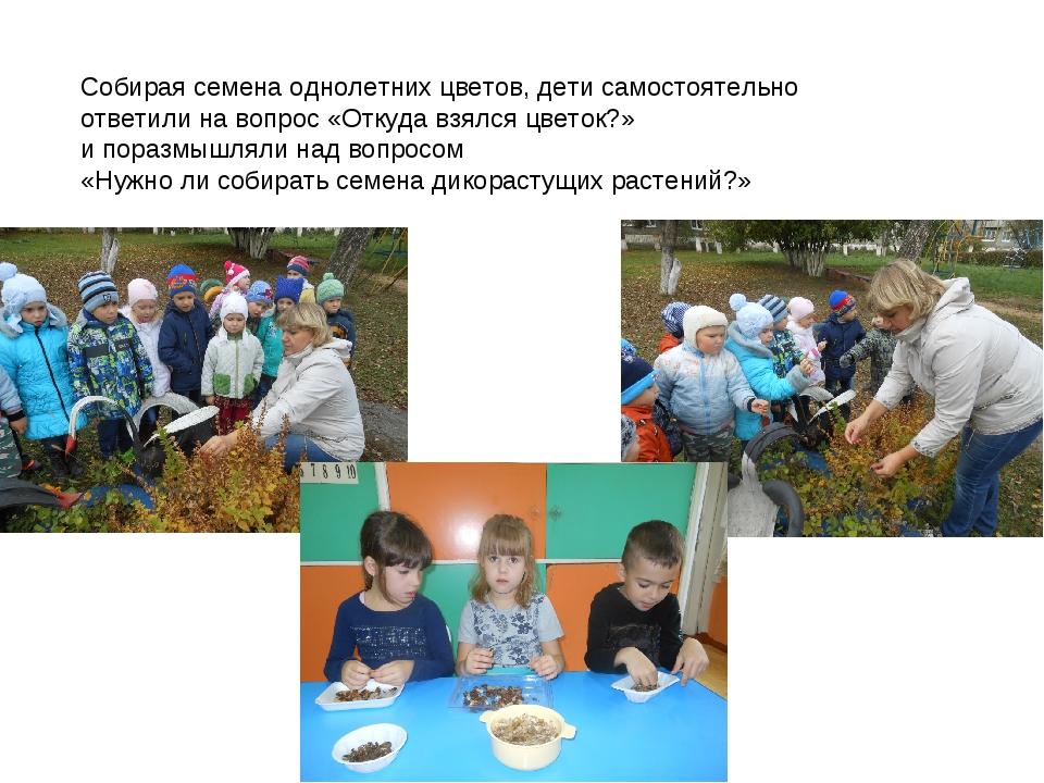 Собирая семена однолетних цветов, дети самостоятельно ответили на вопрос «Отк...