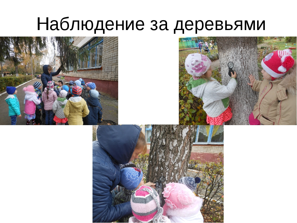 Наблюдение за деревьями