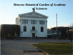 Greenhouse Moscow Botanical Garden of Academy of Sciences
