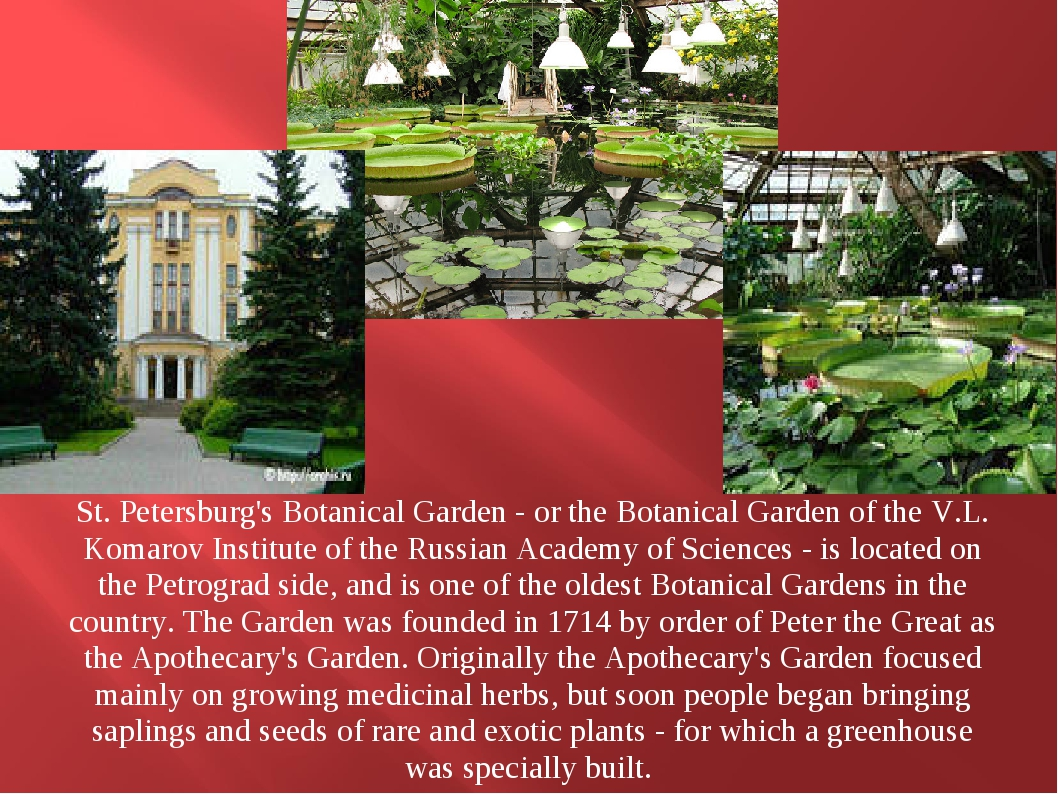 St. Petersburg's Botanical Garden - or the Botanical Garden of the V.L. Koma...
