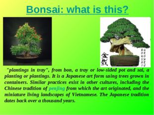 "Bonsai: what is this? ""plantings in tray"", from bon, a tray or low-sided pot"