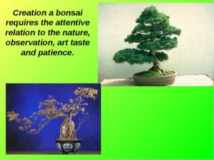Creation a bonsai requires the attentive relation to the nature, observation,