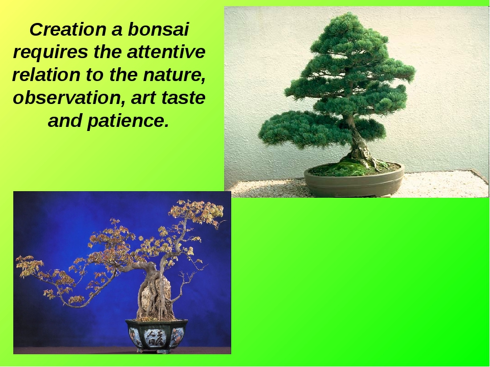 Creation a bonsai requires the attentive relation to the nature, observation,...