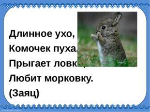Длинное ухо, Комочек пуха, Прыгает ловко, Любит морковку. (Заяц)