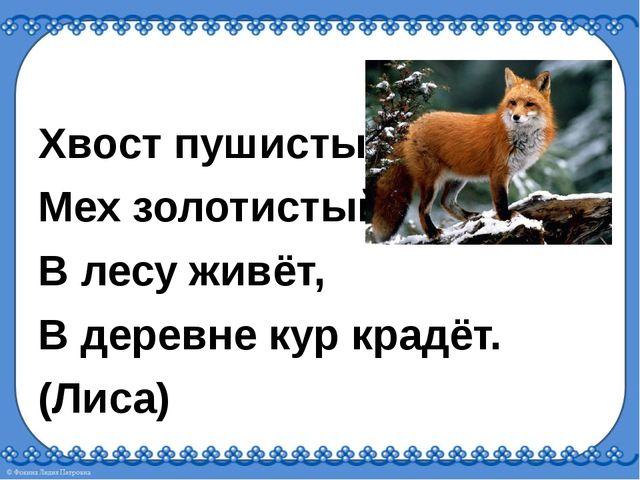Хвост пушистый, Мех золотистый, В лесу живёт, В деревне кур крадёт. (Лиса)