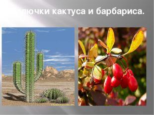 Колючки кактуса и барбариса.