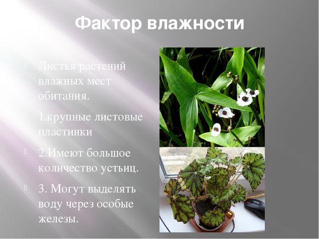 Фактор влажности Листья растений влажных мест обитания. 1.крупные листовые пл...