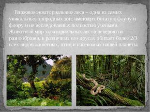 Влажные экваториальные леса– одна из самых уникальных природных зон, имеющи
