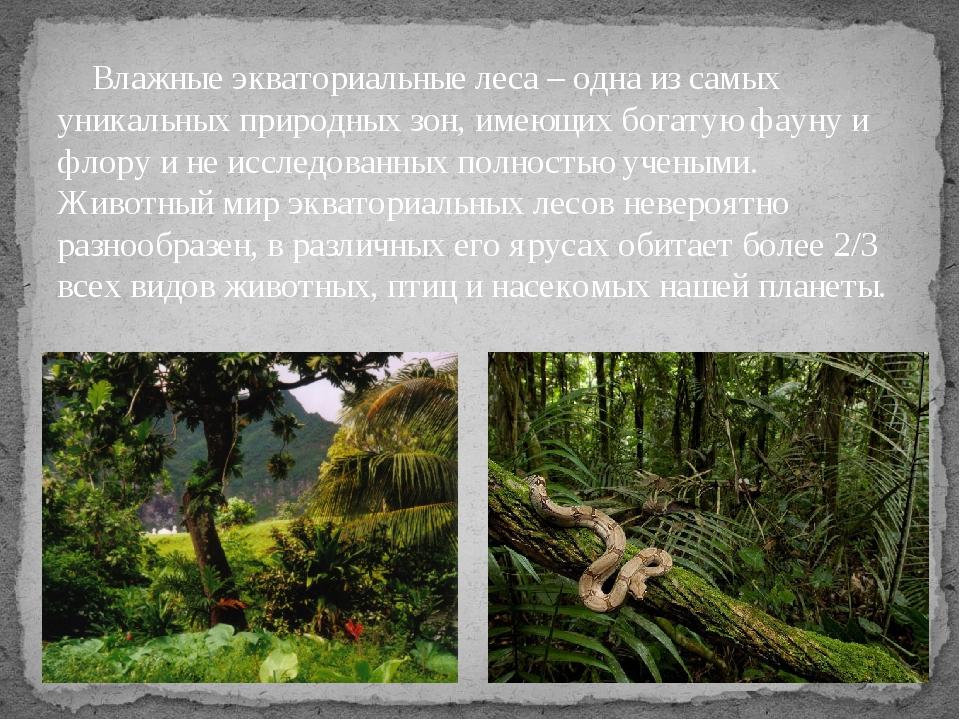 Влажные экваториальные леса– одна из самых уникальных природных зон, имеющи...